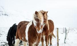 冰島行程路線 4日精華 10日環島遊