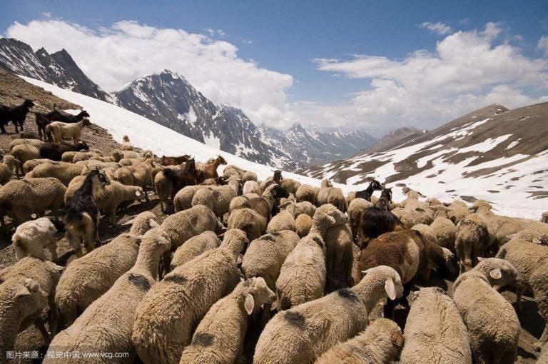 教你如何分辨喀什米爾(Cashmere)羊毛
