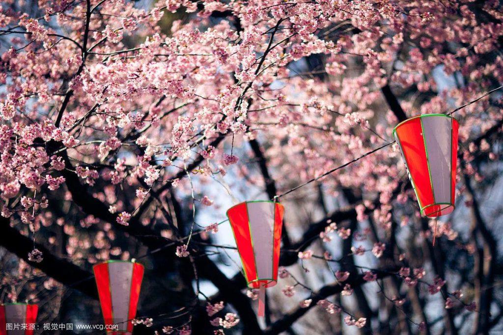 不可錯過的櫻花樹下的浪漫