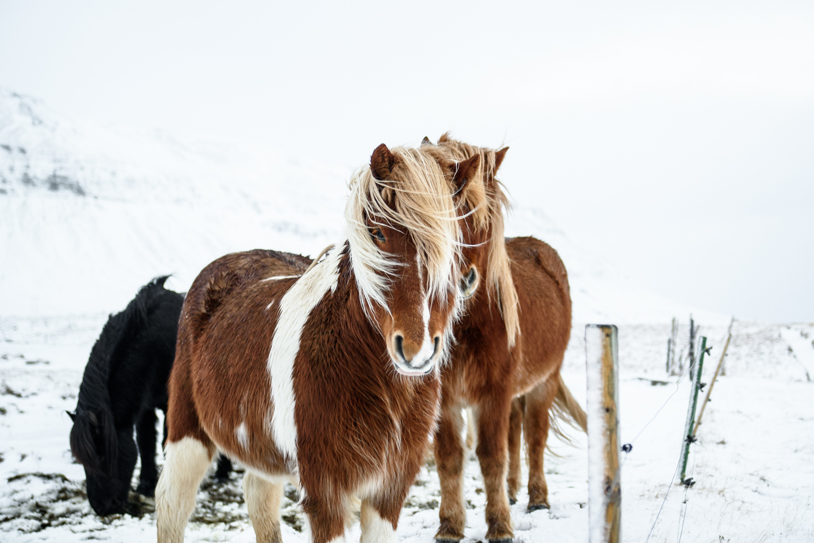 冰島行程路線|4日精華|10日環島遊