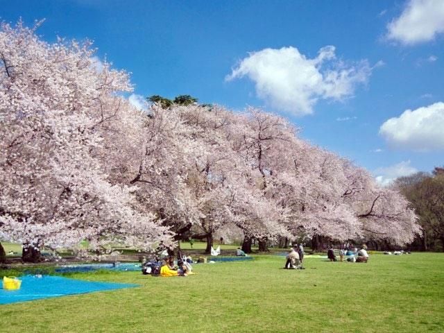 拍照免排隊!日本賞櫻 2020私房景點推薦TOP8